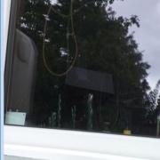 Blaumeise fliegt gegen ein schmutziges Fenster