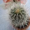 Pflanzenstärkung nach Befall Wollläuse bei Kaktus
