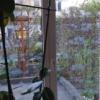 Vogelschutzstreifen 75mm breit auf Glas, Innenansicht , semaSORB PROBIRD DK500 Tape